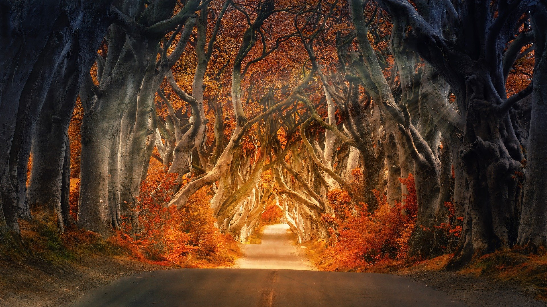 the-dark-hedges