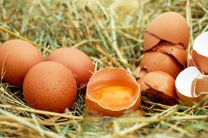 名古屋コーチンの卵の栄養